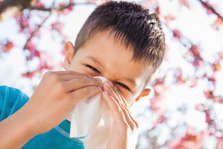 аллергия на полынь амброзию