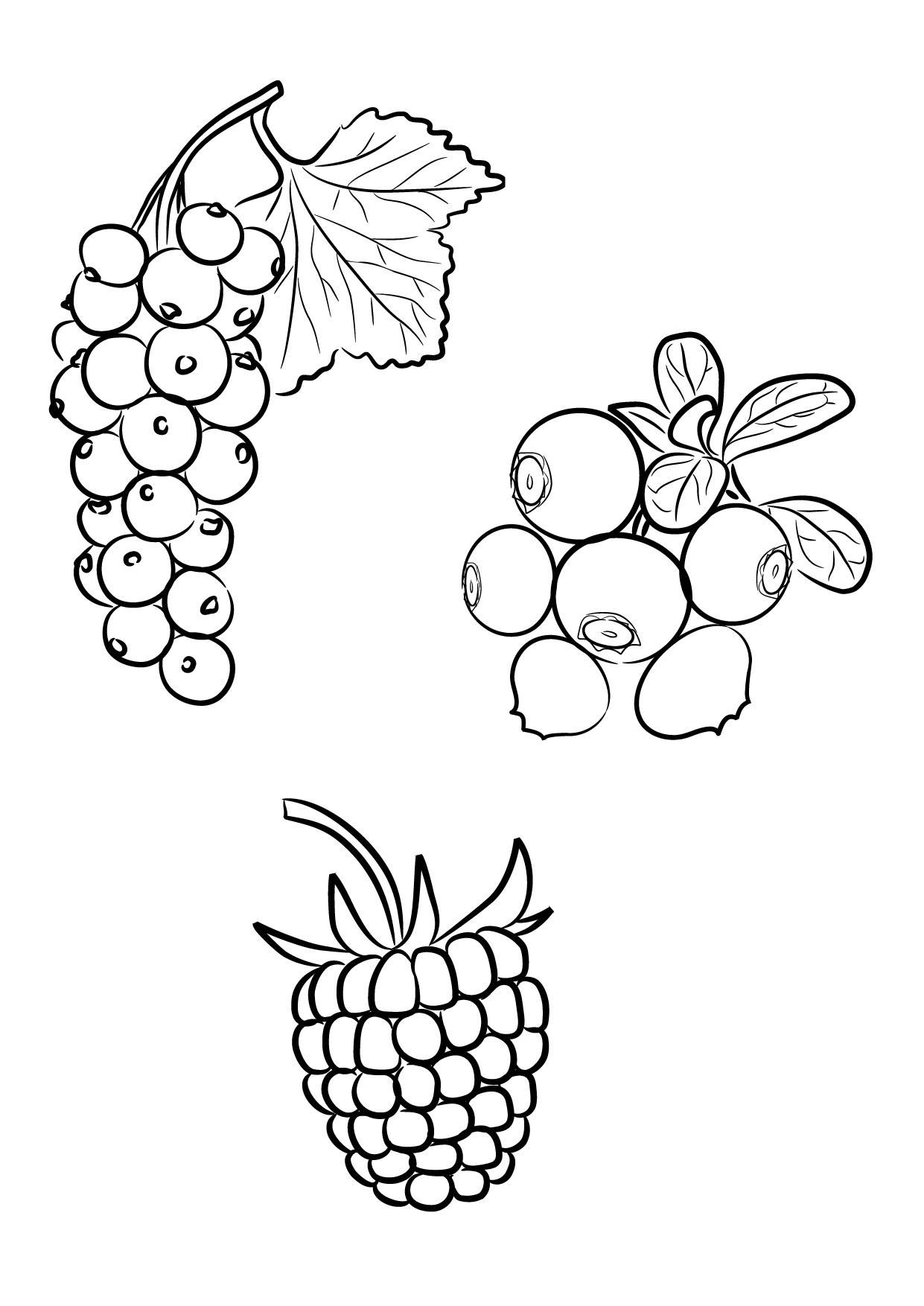 идеи картинки разных ягод нарисовать найдем